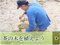 茶の木を植林しよう