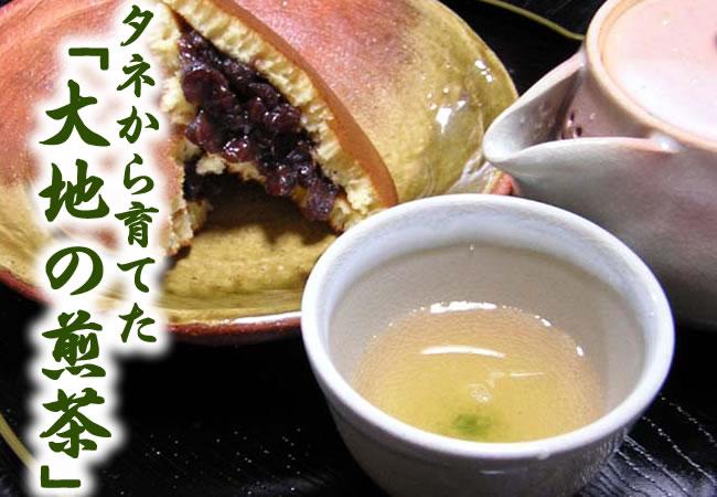 タネから育てた「大地の煎茶」